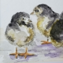 Little Chicks
